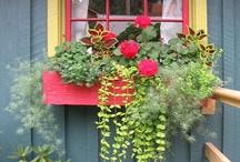 boites à fleurs