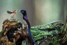 belas aves