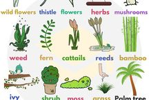 Vocabulary - Plants