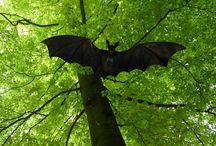 morcegos {bats}