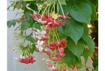 flori de grădină