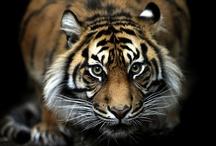 Exotic Animals / by Pasha Johnson
