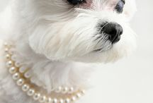 Doggie love  / by Marga R.