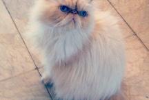 Lucifero ❤ / La bellezza diventata gatto