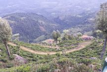 Tea Gardens / Tea Plantations around the World