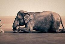 # Animals