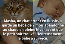 chat gentil et minion