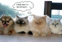 Cats - big&small - love um' all! / by All God's Creatures Pet Services