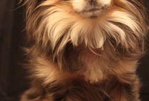 Fluffy / Fluffy and cute