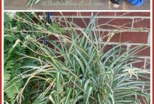 Propagating Plants & Flowers
