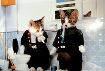 Cats-Cunning Rulers of the Universe / by Beverly Van Pelt