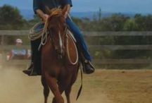 Horse - Natural horsemanship
