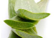 Dinko / Aloe vera