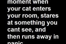 Cats - funstuff