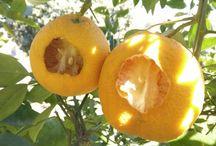 Monte Valindo / Valindo fruits