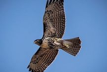 Wildlife / Photos of the wonderful creatures that reside in Oregon.