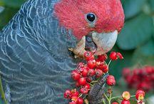 Parrots / Beautiful creatures...