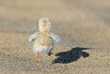 Animals and cuteness / by Christina Mason Hartman