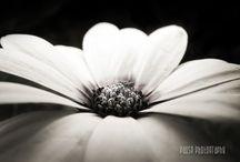 Daisy room / by Jennifer Wilson