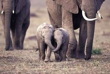 Elephants / my tribute to the noblest of animals... / by Pearls With Plaid