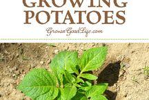 Pflanzen Tipps / Tipps und Ratschläge für die Pflege von Pflanzen