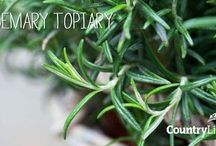 Rosemary Topiary / Looking to add a feature to your garden or home then why not turn your Rosemary plant into a Topiary with Jeans easy tips: http://bit.ly/1NEnDHM   To inspire you have a look at some of these, they really are beautiful.