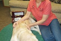 Alternative therapies for your pets / Lots of people prefer to avoid medications and drugs to help their pets if possible, here you will find great information about alternative treatments for your pets.