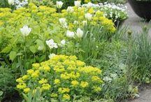 Gardening: Yellow&Cream colour schemes.