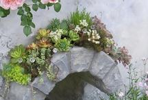 succulents / by Teresa Reichman