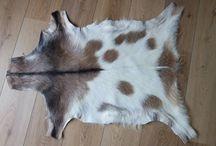 Geitenvellen / Een geitenvel ligt mooi op tafel of als kleedje op de grond.
