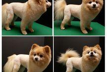 Haircut for boo