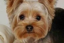 doggy .....¡¡¡¡:-)