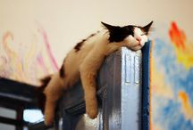 meow / by ayako nakamura