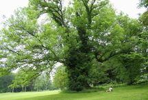 Trees / Farm landscape feature plants, shelter, firewood and forage trees.