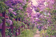 Garden magic / gardening