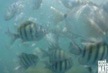 Mergulho Livre (Snorkeling)
