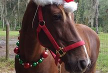 Holiday Costume Ideas for Horses and Ponies