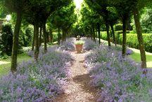 Lifestyle l Gardening