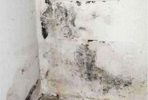 Illinois Mold Removal