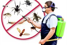 Pest Control / Pest control refers to the regulation or management of a species defined as a pest, Termites cause more damage than fire, floods, hurricanes and tornadoes combined!