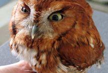 Owls / by Sky