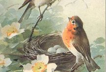 Pássaros lindosm