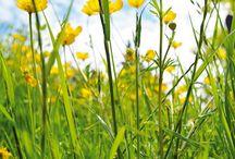 Fiori di Primavera.