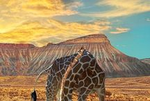 Travel To:  Africa