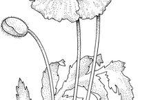 Flower outlines