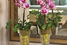 Indoor plantings / by Donna Speight