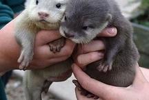 otters!!