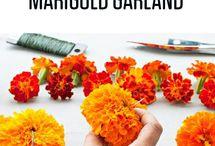 marigold basket
