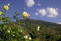 La Palma - Live / Pictures from the Canary island La Palma