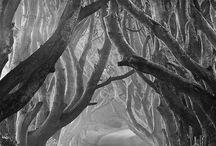Zwart wit bomen